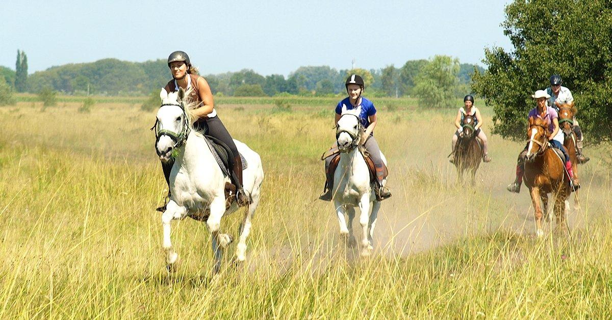 Egész napos lovastúra vagy kétórás tereplovaglás 2 főnek