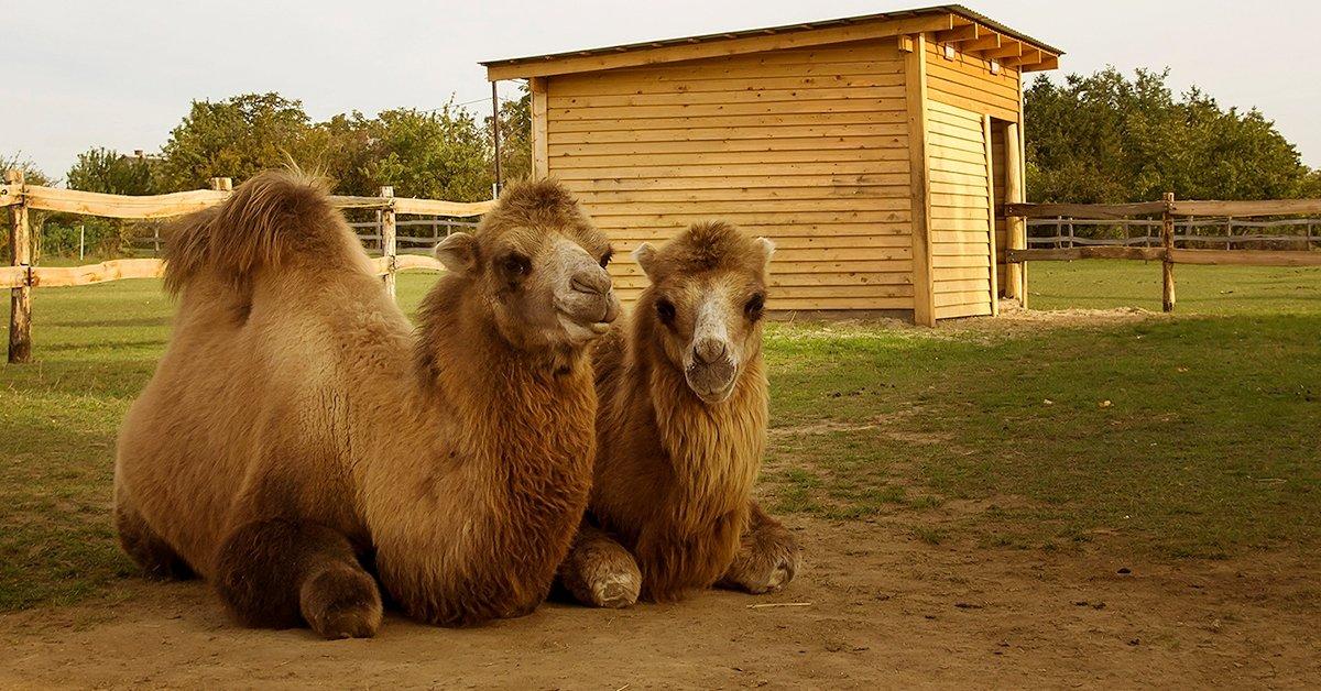 Állatpark látogatás Siófokon