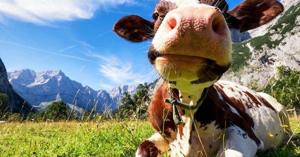 Lindt csoki kóstolás és lélegzetelállító látvány Ausztriában