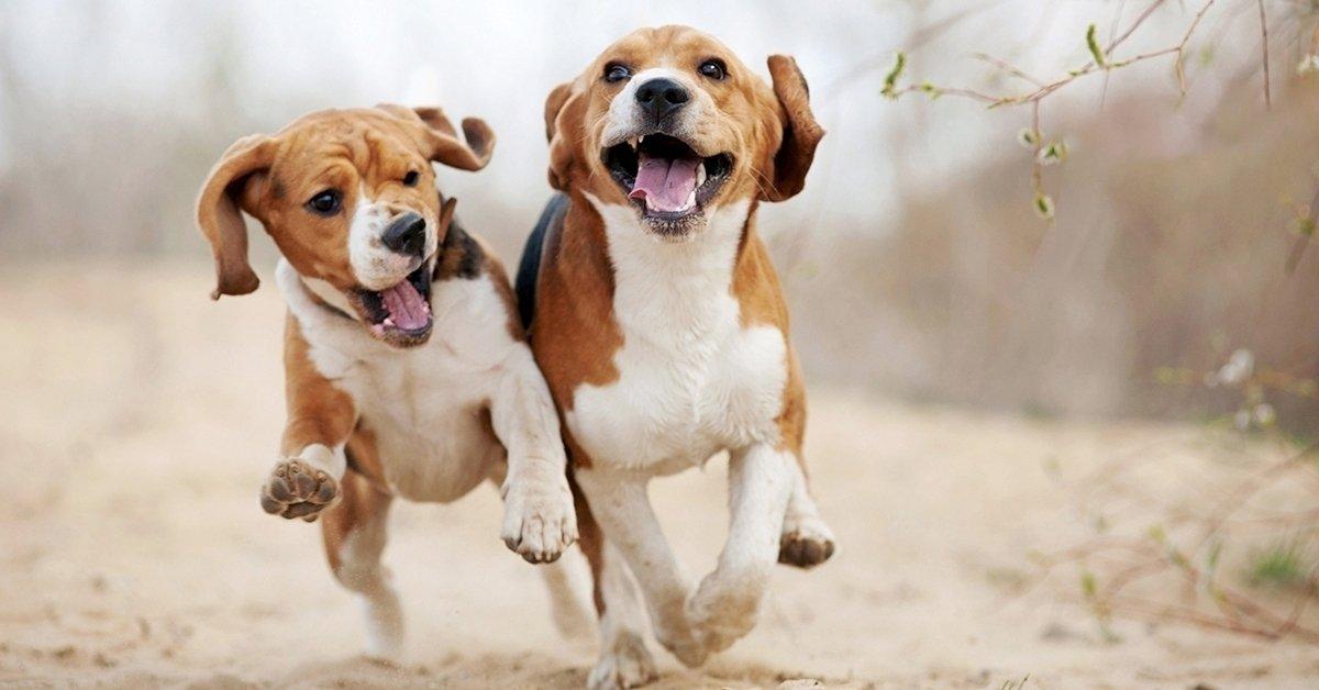 Élmény kis kedvencednek: 1 órás kutyafuttatás