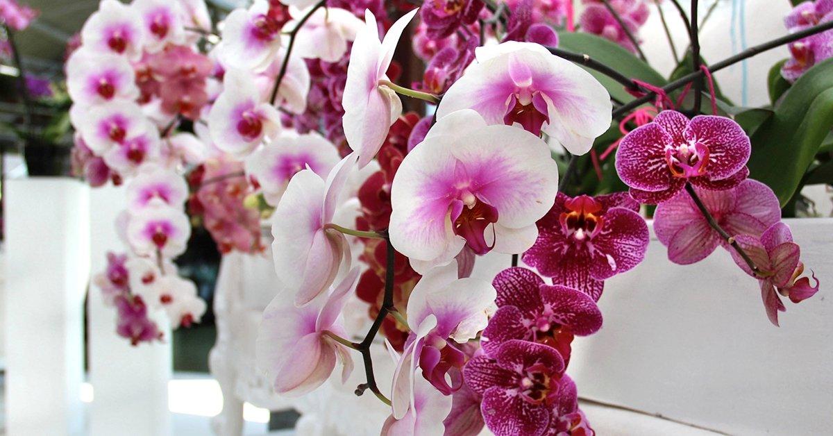 Utazás a klosterneuburgi Nemzetközi Orchideakiállításra