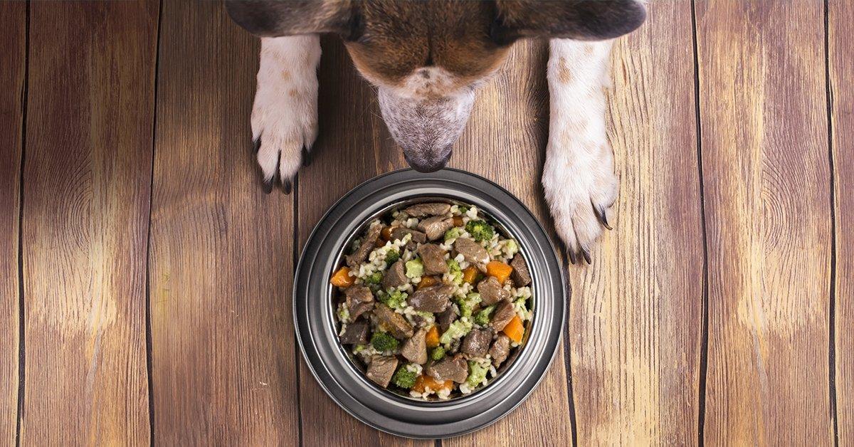 Kedvencednek a legjobbat: 8 db-os főtt kutyaeledel válogatás