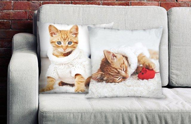 Párnahuzat, Vörös cica + más állat